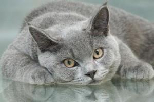 cat_generic_f3