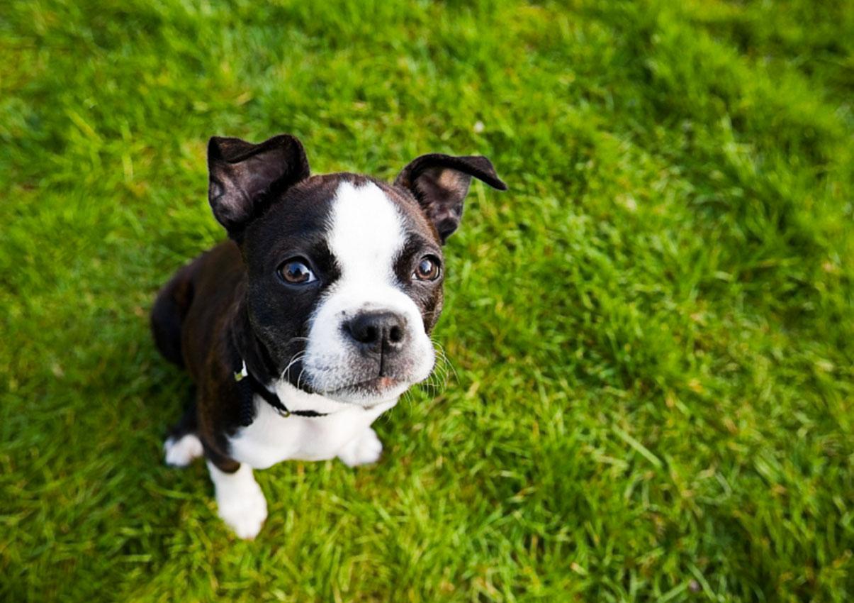 small-dog