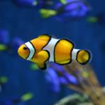 Saltwater Fish & Supplies