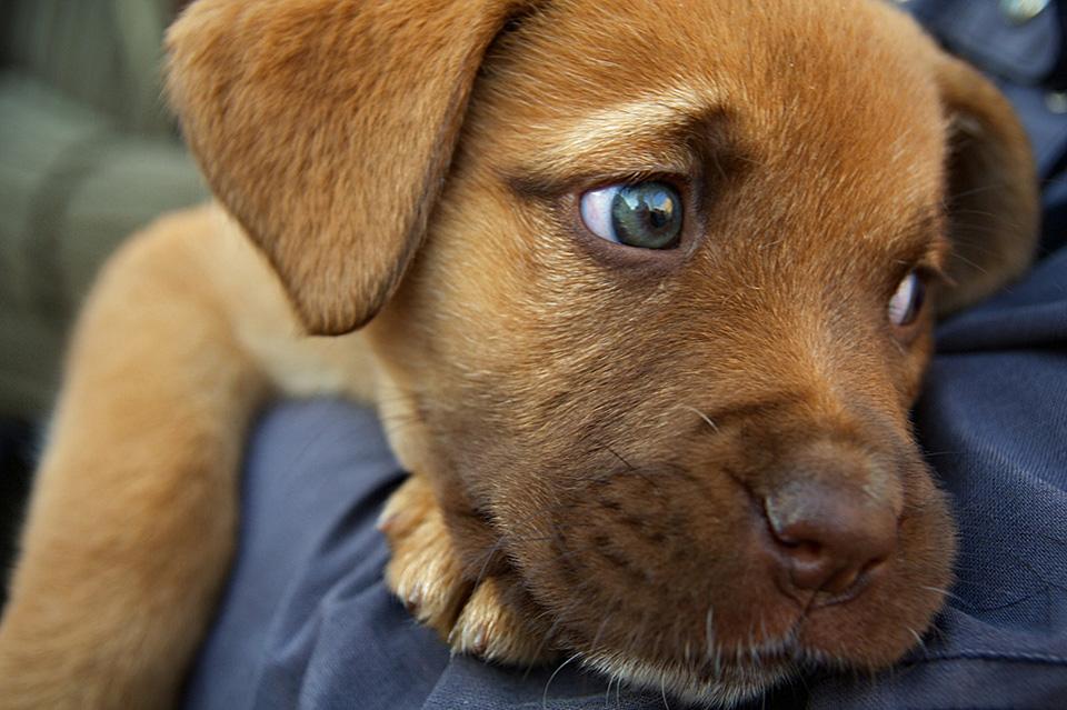 slider-puppy
