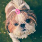Cute Bow Ties!